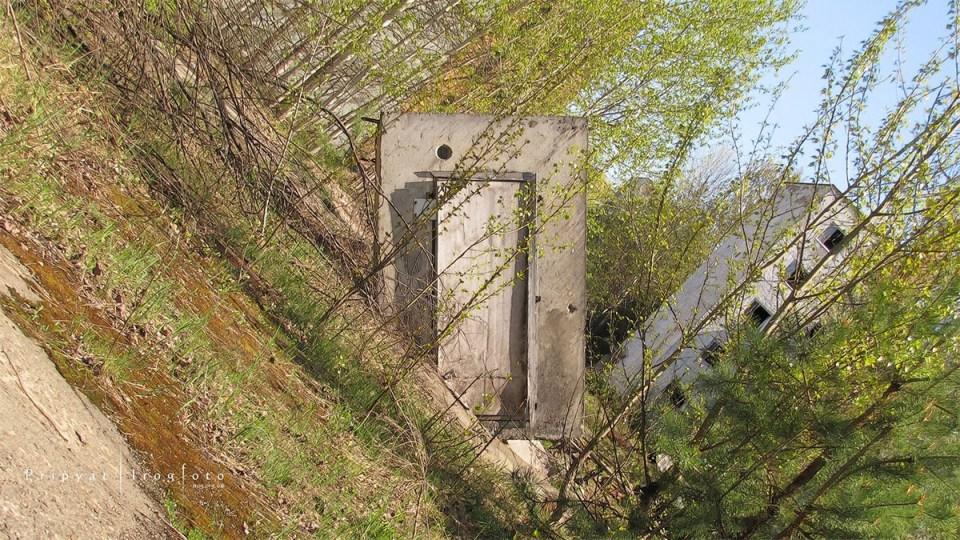 pripyat-chernobyl-natura-vegetazione-animali-radiazioni-15