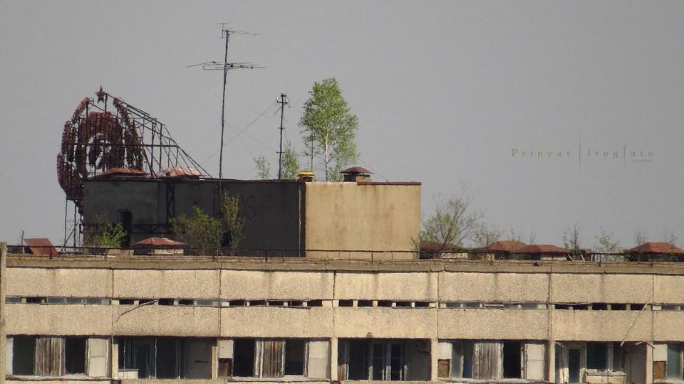 pripyat-chernobyl-natura-vegetazione-animali-radiazioni-16