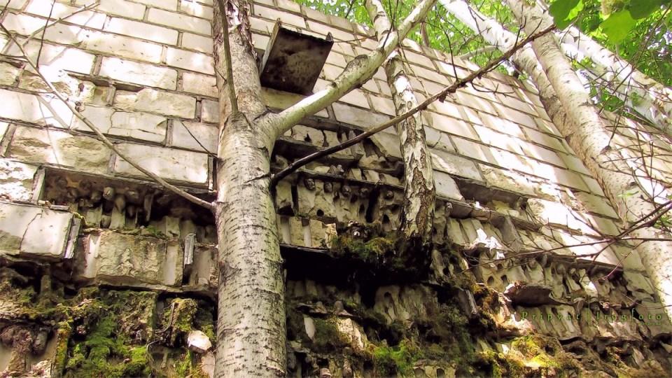 pripyat-chernobyl-natura-vegetazione-animali-radiazioni-17