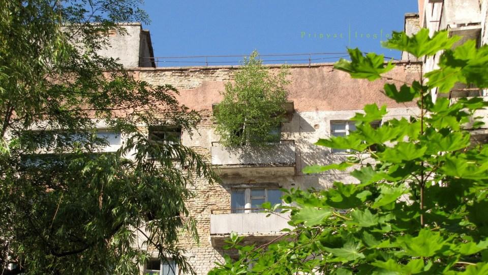pripyat-chernobyl-natura-vegetazione-animali-radiazioni-18