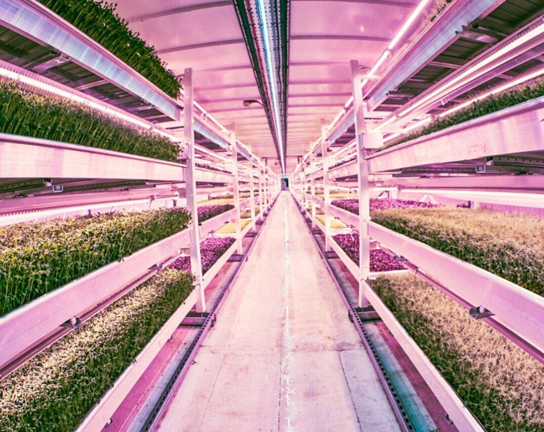 rifugio-antiaereo-londra-serra-idroponica-orto-sotterraneo-growing-underground-5