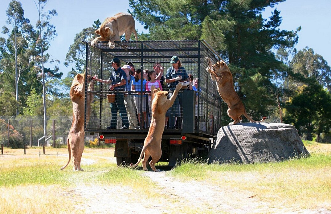 zoo-persone-in-gabbia-nuova-zelanda-orana-wildlife-park-1