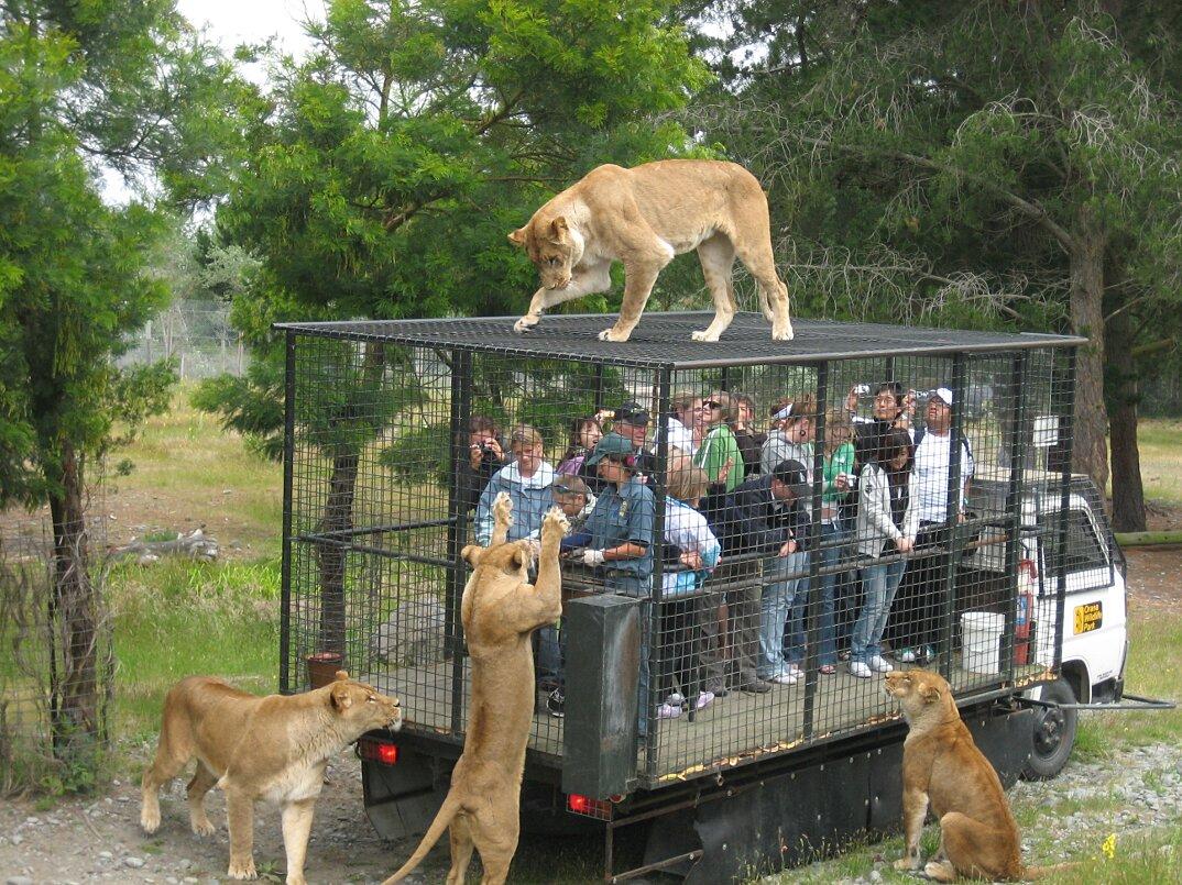 zoo-persone-in-gabbia-nuova-zelanda-orana-wildlife-park-2