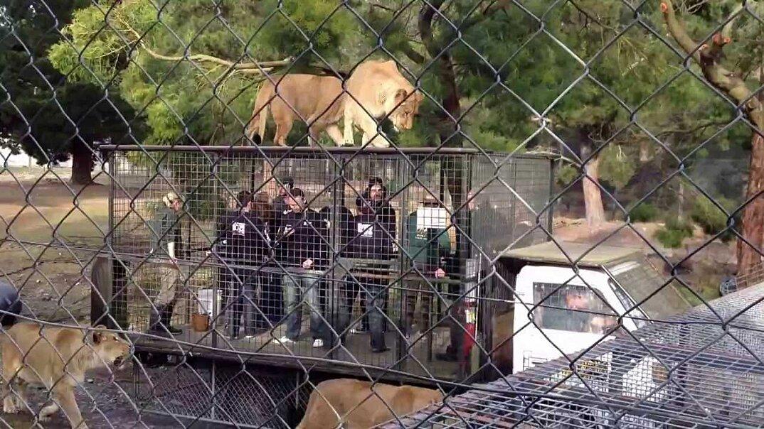 zoo-persone-in-gabbia-nuova-zelanda-orana-wildlife-park-3