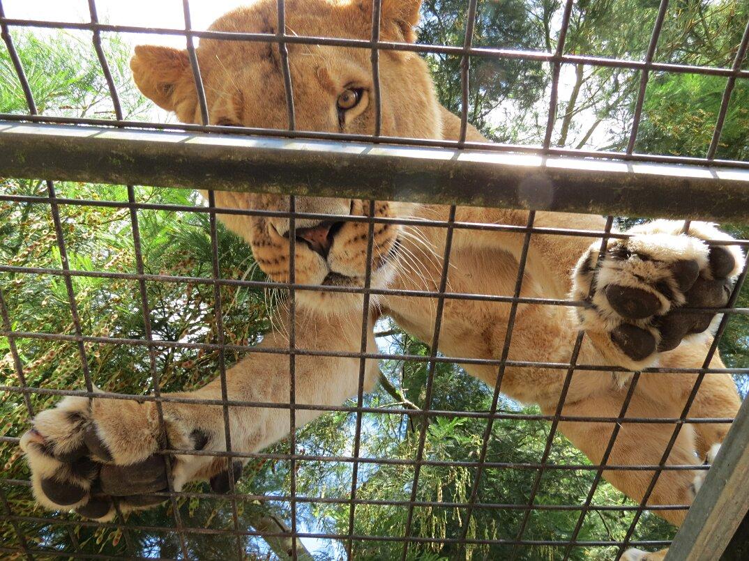 zoo-persone-in-gabbia-nuova-zelanda-orana-wildlife-park-5