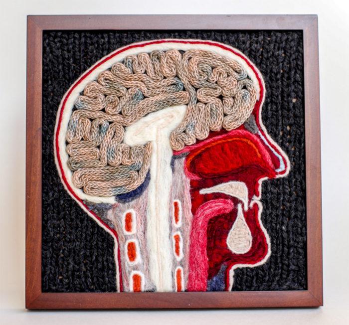 animali-sezionare-anatomia-finti-maglia-emily-stoneking-04