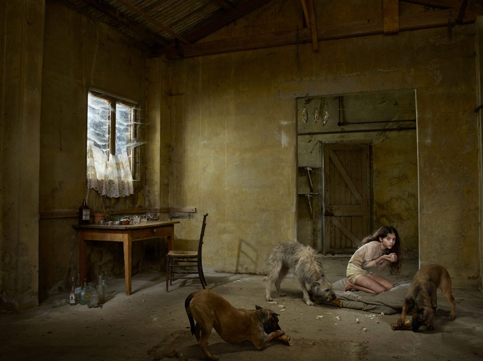 bambini-ferini-animali-selvatici-foto-julia-fullertone-batten-06