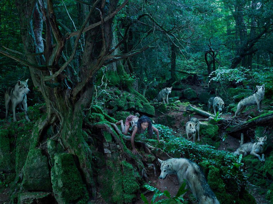 bambini-ferini-animali-selvatici-foto-julia-fullertone-batten-15