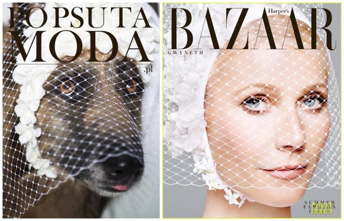 cani-adottare-campagna-foto-compertine-riviste-moda-divertenti-po-psu-ta-moda-04