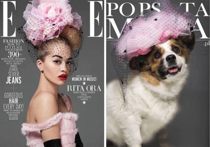 cani-adottare-campagna-foto-compertine-riviste-moda-divertenti-po-psu-ta-moda-08