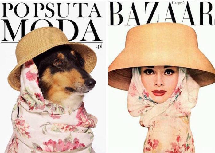 cani-adottare-campagna-foto-compertine-riviste-moda-divertenti-po-psu-ta-moda-09