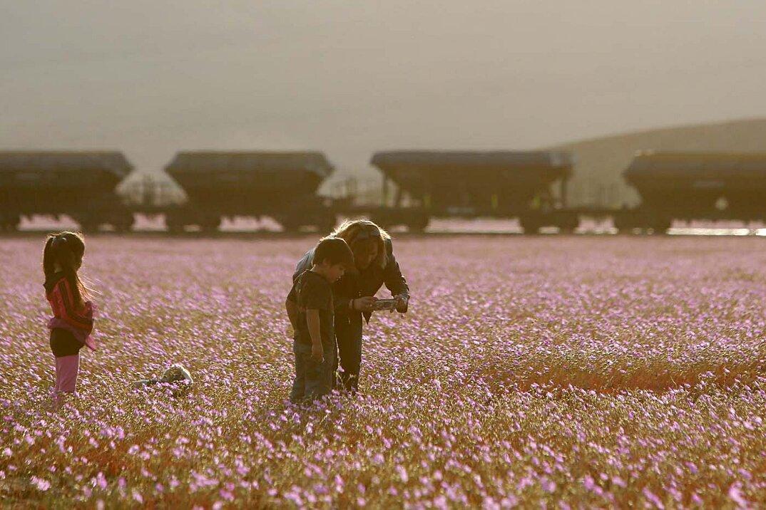 deserto-fiorito-atacama-cile-1