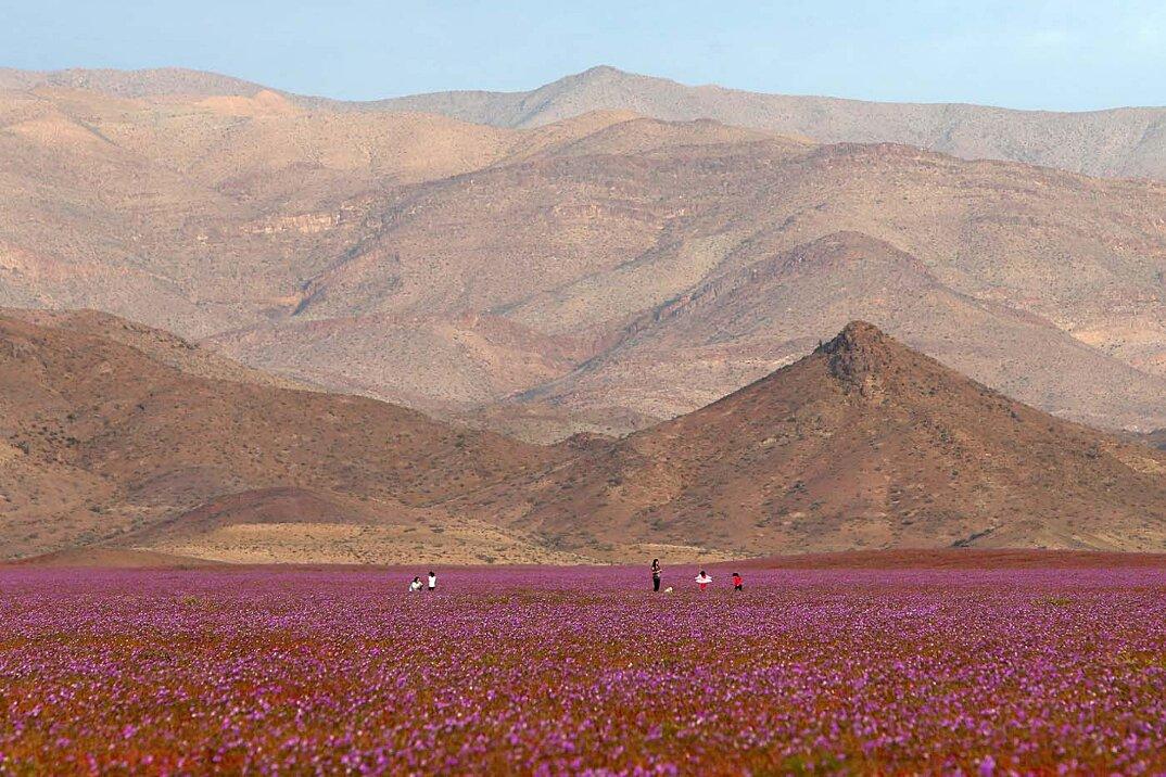 deserto-fiorito-atacama-cile-7