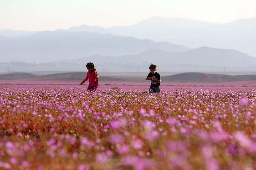deserto-fiorito-atacama-cile-9
