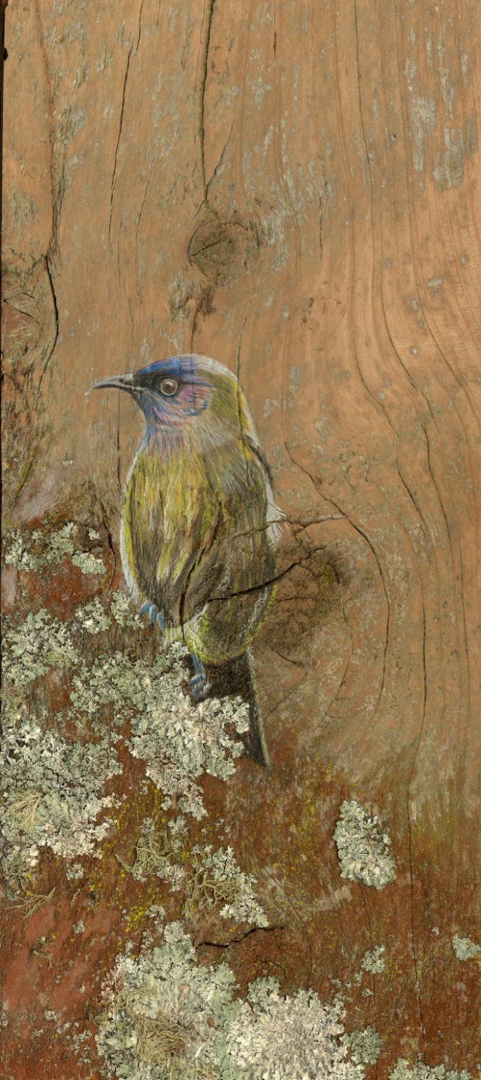 disegni-uccelli-legno-riciclato-john-jepson-6