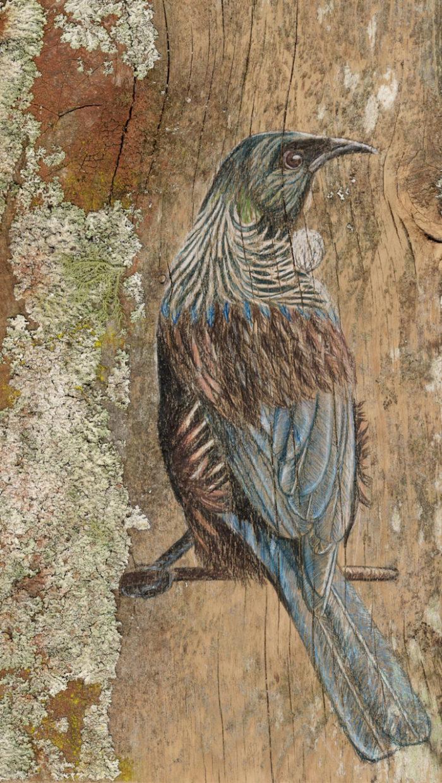 disegni-uccelli-legno-riciclato-john-jepson-7