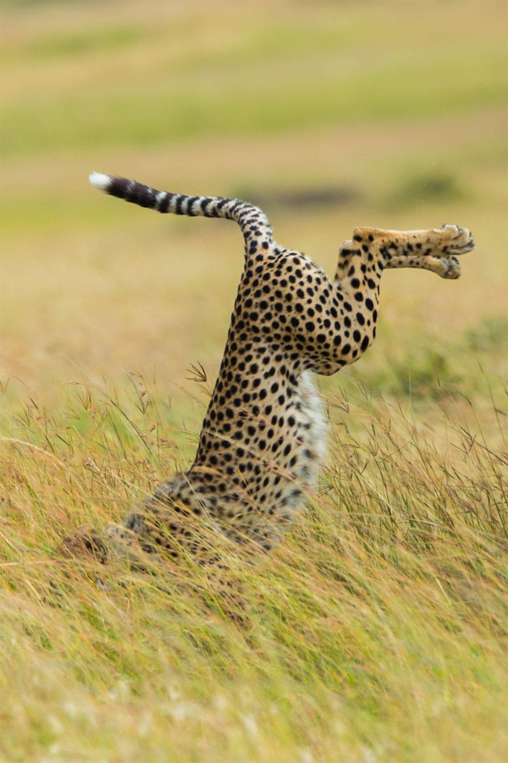 foto-animali-divertenti-comedy-wildlife-photography-awards-01