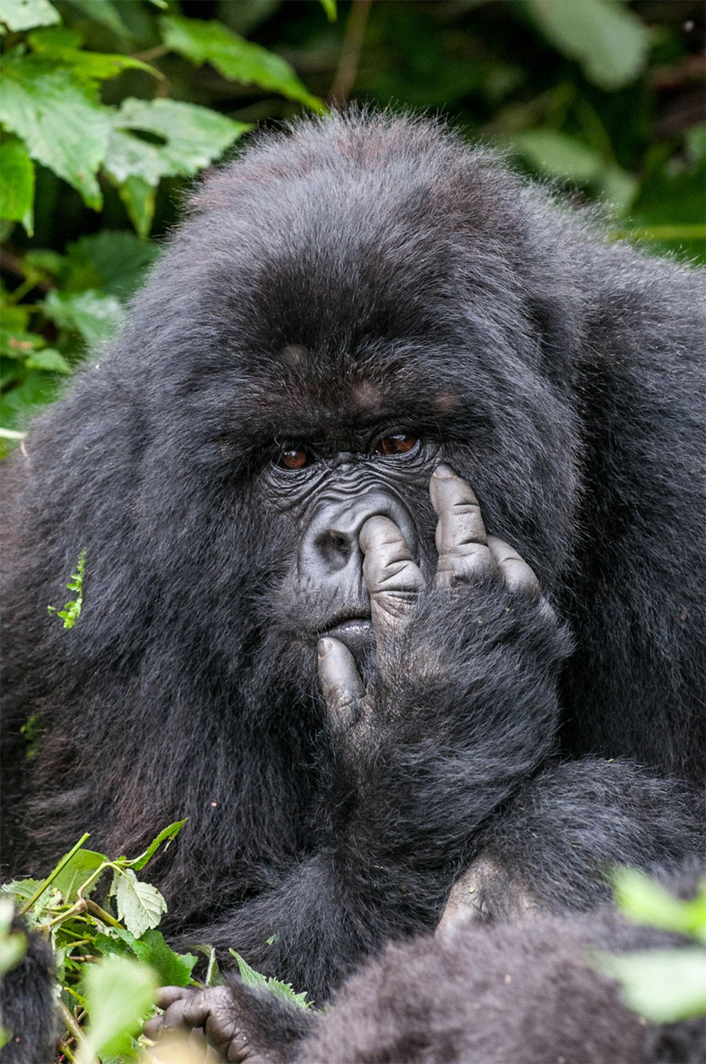 foto-animali-divertenti-comedy-wildlife-photography-awards-02