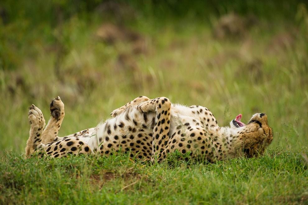 foto-animali-divertenti-comedy-wildlife-photography-awards-03