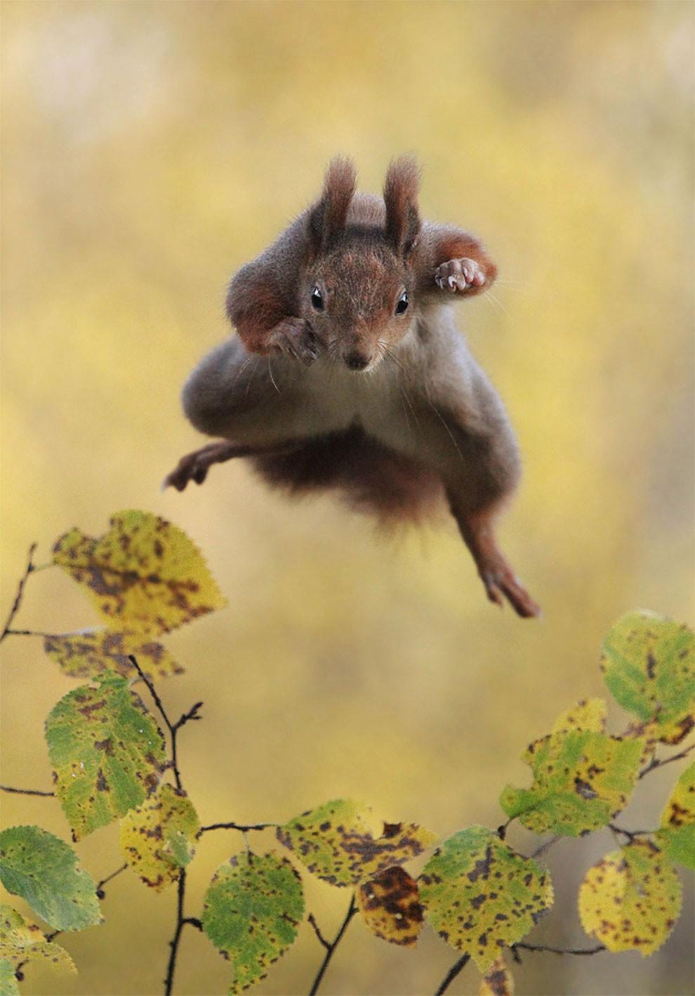 foto-animali-divertenti-comedy-wildlife-photography-awards-06