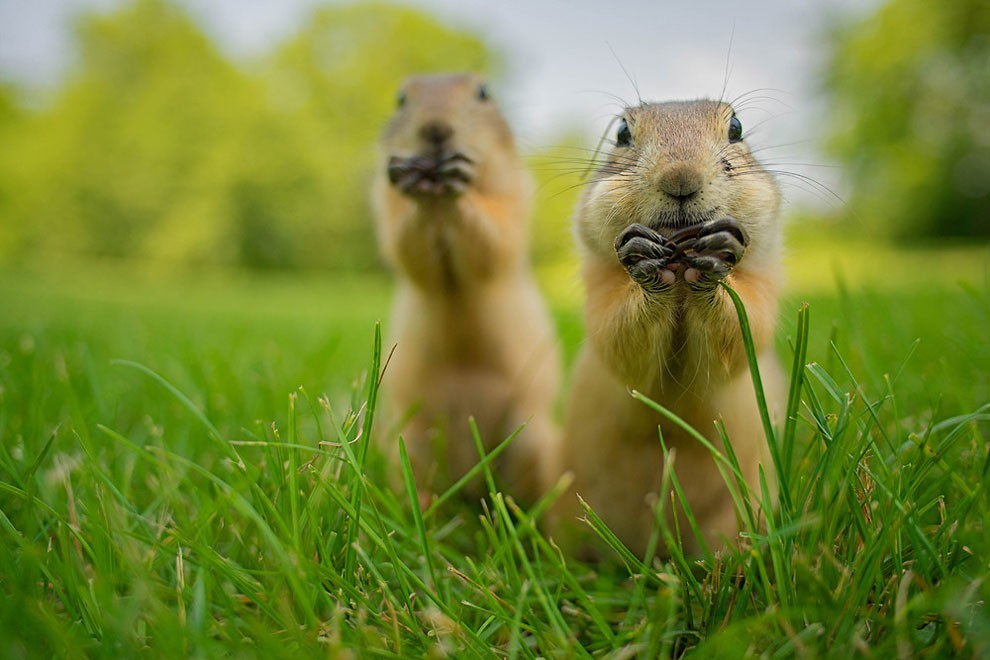 foto-animali-divertenti-comedy-wildlife-photography-awards-07