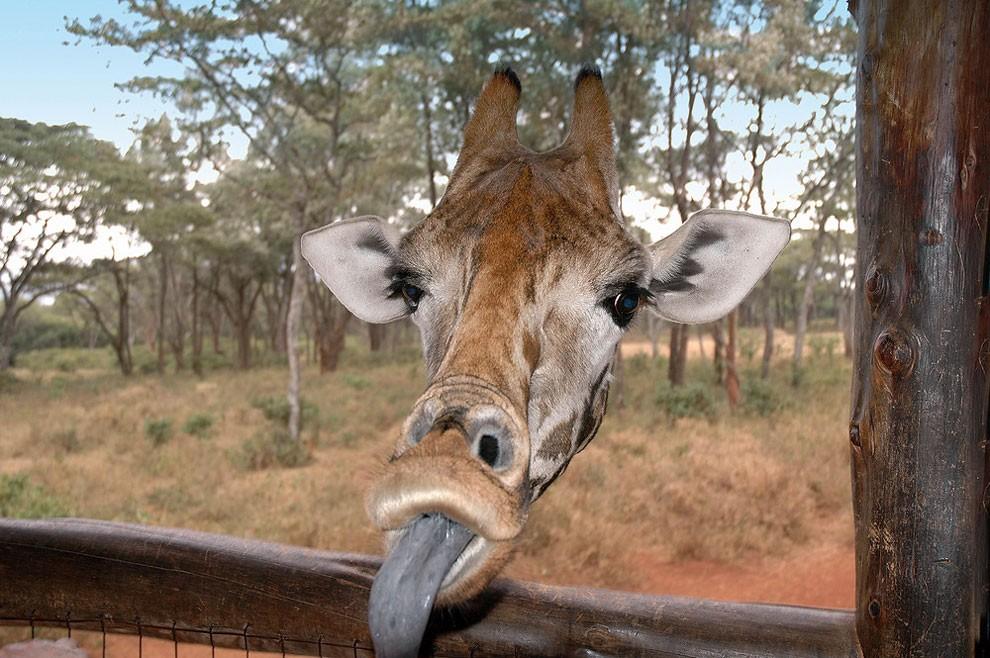foto-animali-divertenti-comedy-wildlife-photography-awards-09