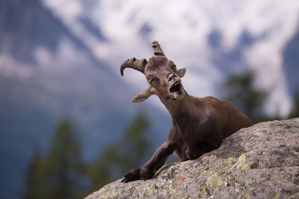 foto-animali-divertenti-comedy-wildlife-photography-awards-10