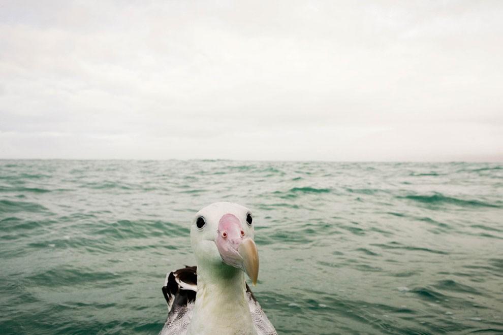 foto-animali-divertenti-comedy-wildlife-photography-awards-13
