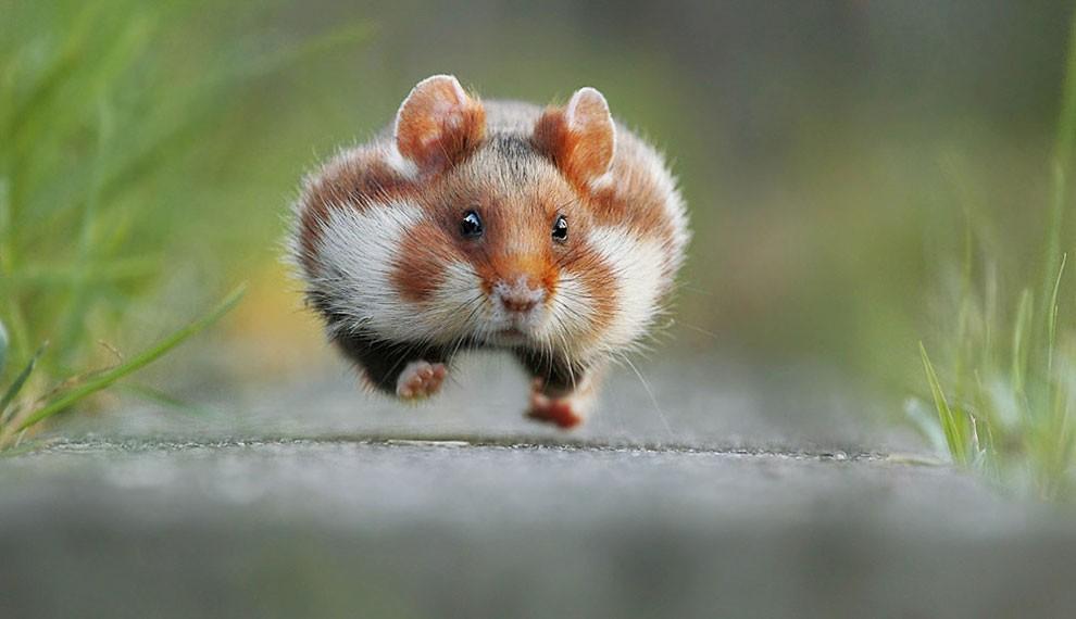 foto-animali-divertenti-comedy-wildlife-photography-awards-14