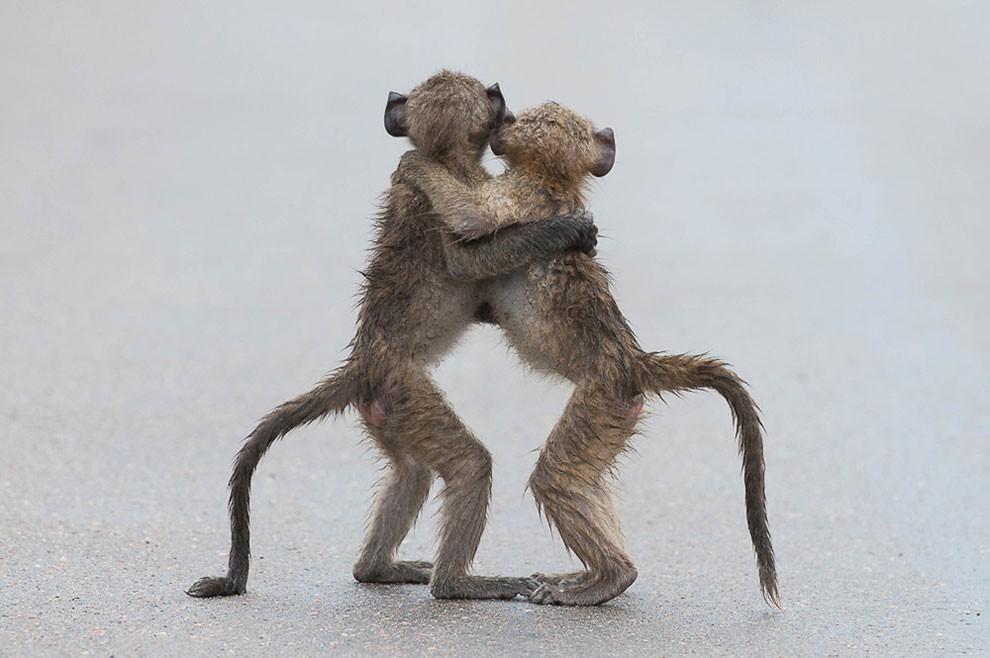 foto-animali-divertenti-comedy-wildlife-photography-awards-19
