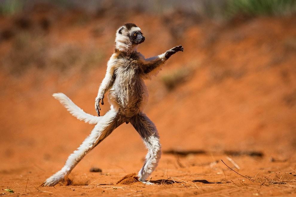 foto-animali-divertenti-comedy-wildlife-photography-awards-20
