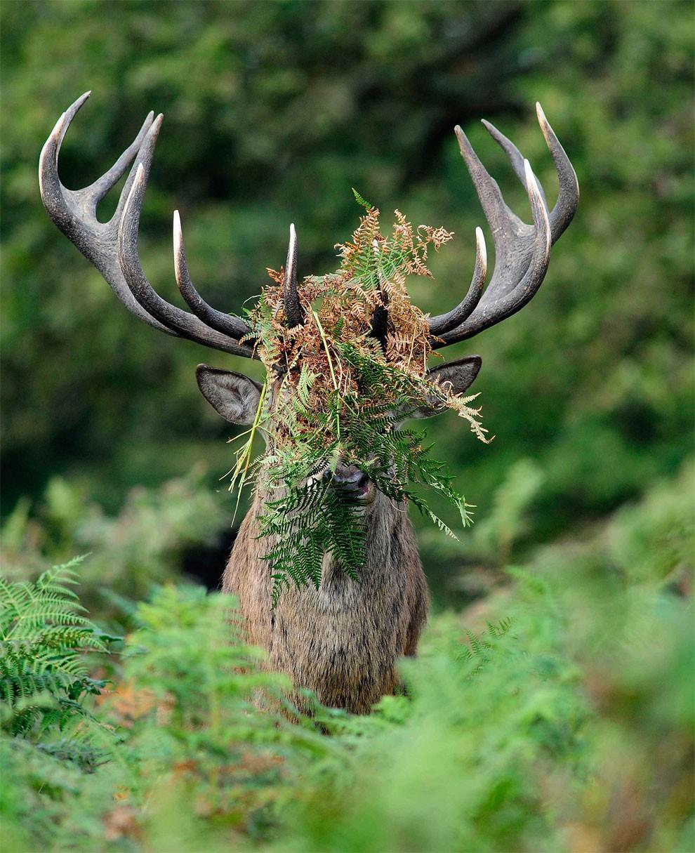 foto-animali-divertenti-comedy-wildlife-photography-awards-21