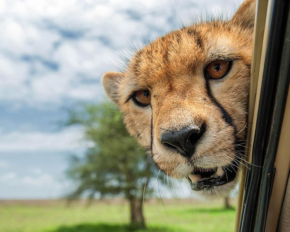 foto-animali-divertenti-comedy-wildlife-photography-awards-22