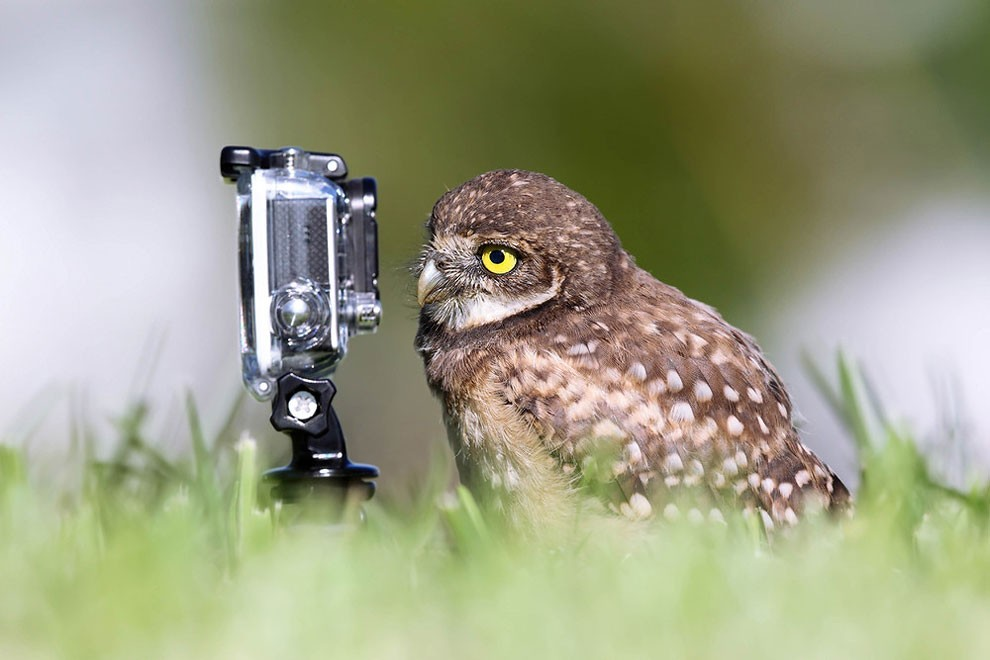 foto-animali-divertenti-comedy-wildlife-photography-awards-23