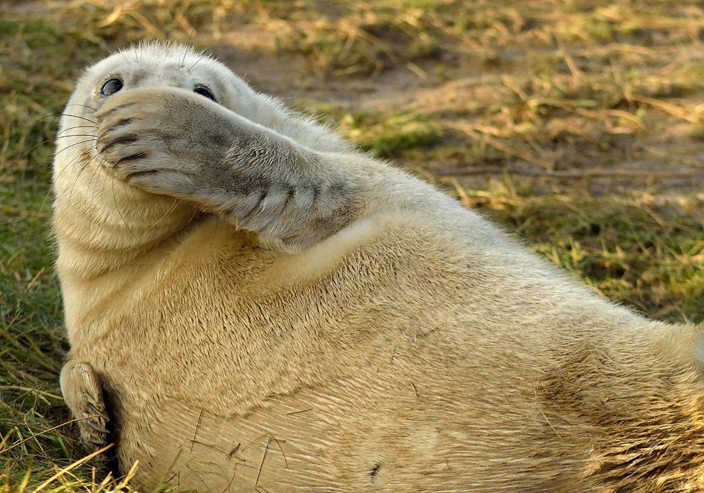 foto-animali-divertenti-comedy-wildlife-photography-awards-24