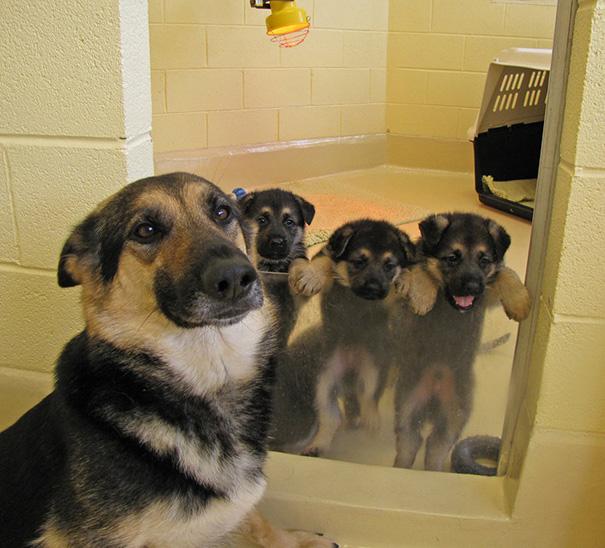 foto-cani-mamma-cuccioli-03