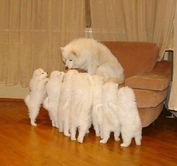 foto-cani-mamma-cuccioli-04