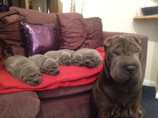 foto-cani-mamma-cuccioli-05
