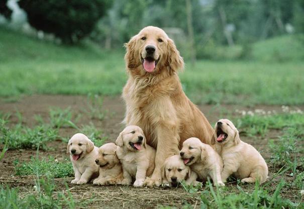 foto-cani-mamma-cuccioli-09