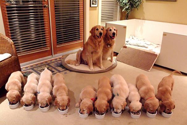 foto-cani-mamma-cuccioli-11