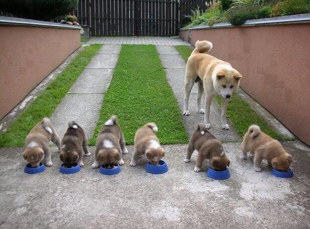 foto-cani-mamma-cuccioli-12