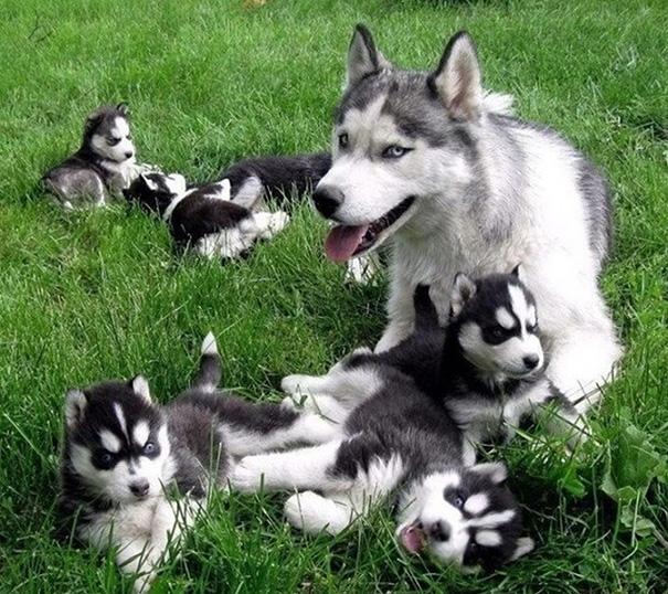 foto-cani-mamma-cuccioli-13