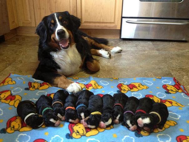 foto-cani-mamma-cuccioli-14