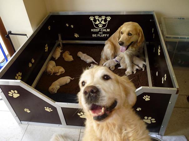 foto-cani-mamma-cuccioli-16