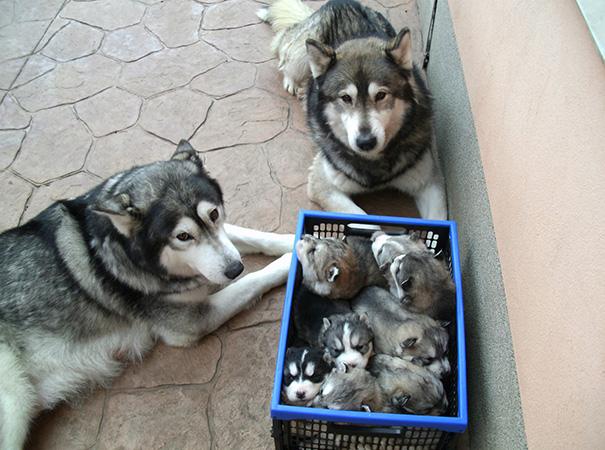 foto-cani-mamma-cuccioli-17