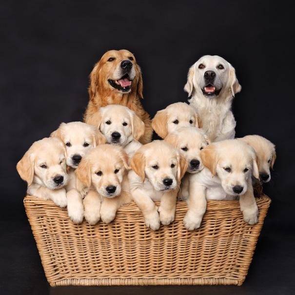 foto-cani-mamma-cuccioli-18