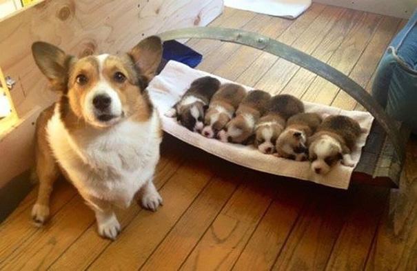 foto-cani-mamma-cuccioli-20