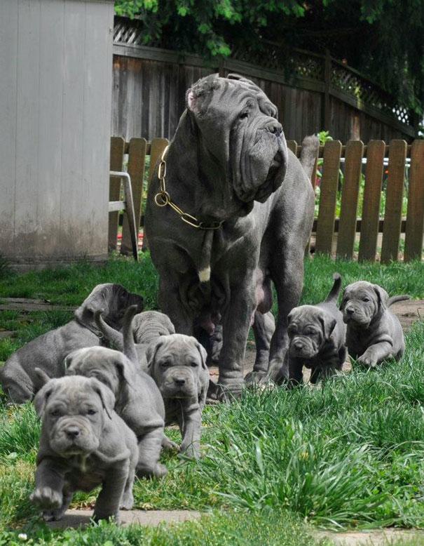 foto-cani-mamma-cuccioli-21