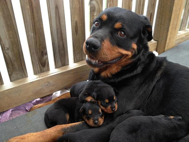 foto-cani-mamma-cuccioli-23