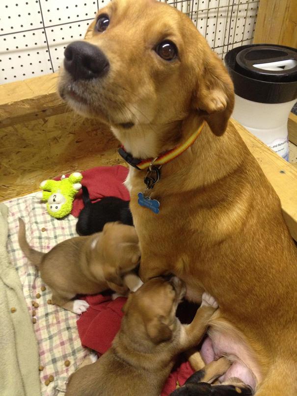 foto-cani-mamma-cuccioli-25